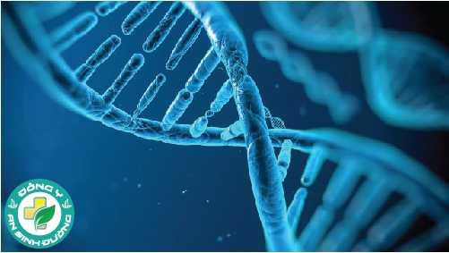 Yếu tố di truyền có thể góp phần vào sự phát triển của ung thư