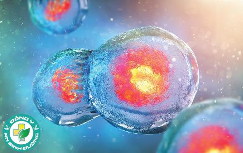 Ung thư khiến các tế bào phân chia không kiểm soát
