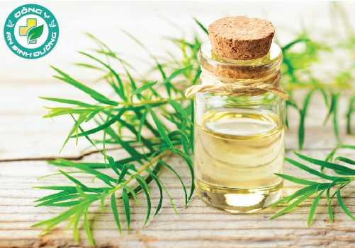 Mùi thơm của tinh dầu tràm giúp chữa hôi miệng rất tốt