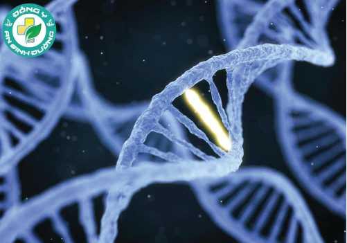 Gen di truyền có thể quyết định cách bạn cảm nhận hương vị của rau