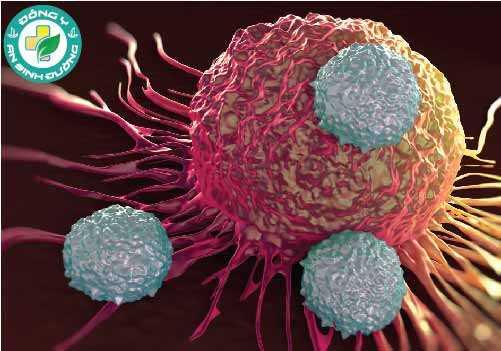 Tế bào ung thư sẽ phát triển, phân chia không theo quy luật