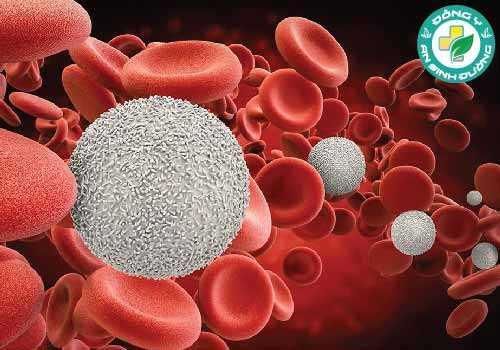 Bệnh bạch cầu xảy ra khi tủy xương tạo ra quá nhiều tế bào bạch cầu bất thường trong khi ung thư hạch bắt đầu trong hệ thống miễn dịch và ảnh hưởng đến các hạch bạch huyết và tế bào lympho